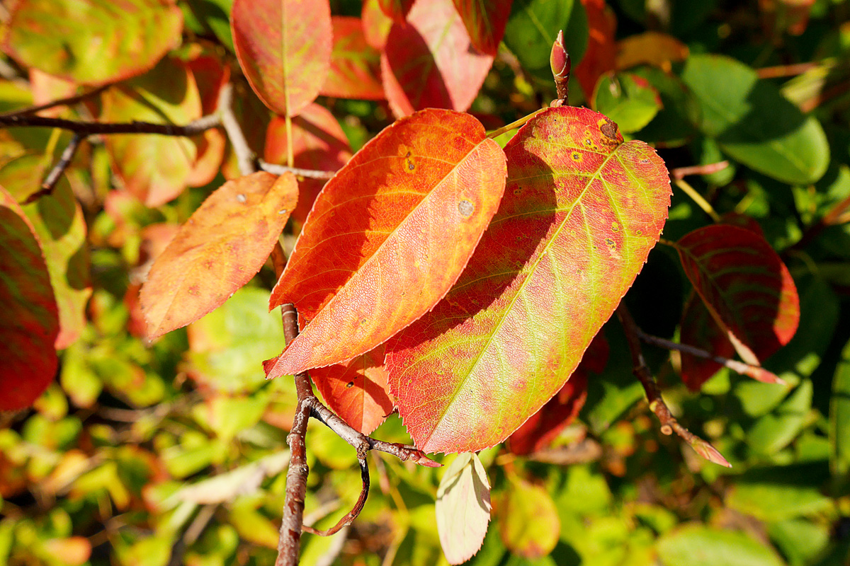 1_Herbst 2015