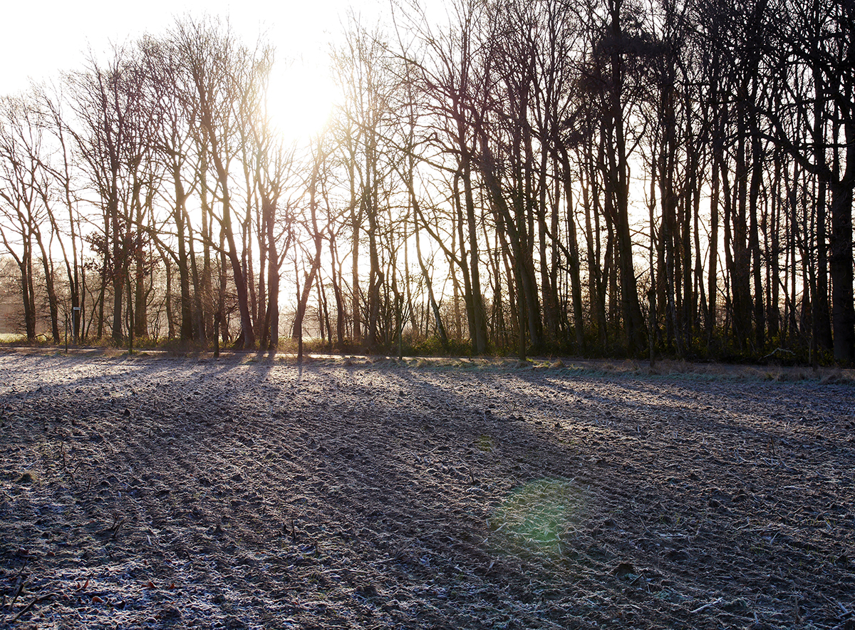Frost auf dem Feld