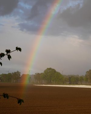 Am Ende des Regenbogens_3