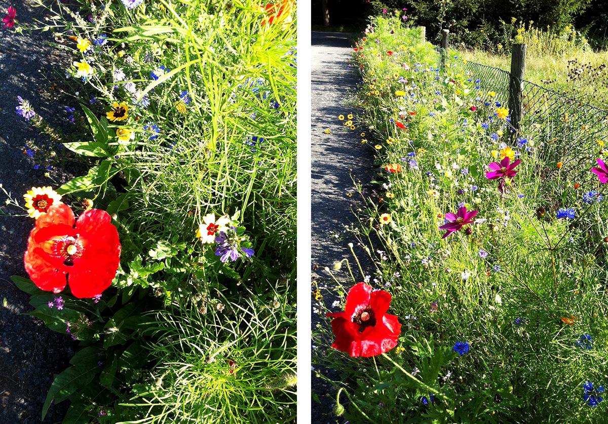 Blumenwiesenweg_3